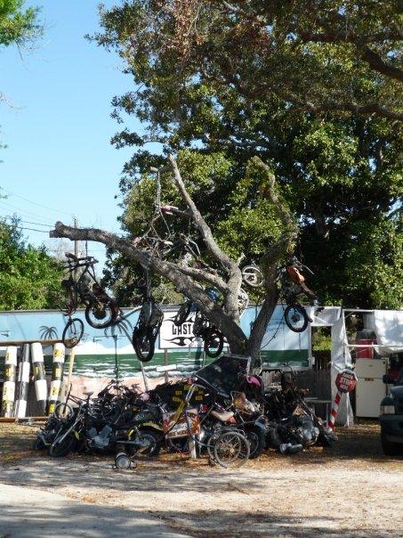 bike tree the last resort bar daytona beach aileen wuornos monster